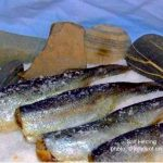 Salt Herring