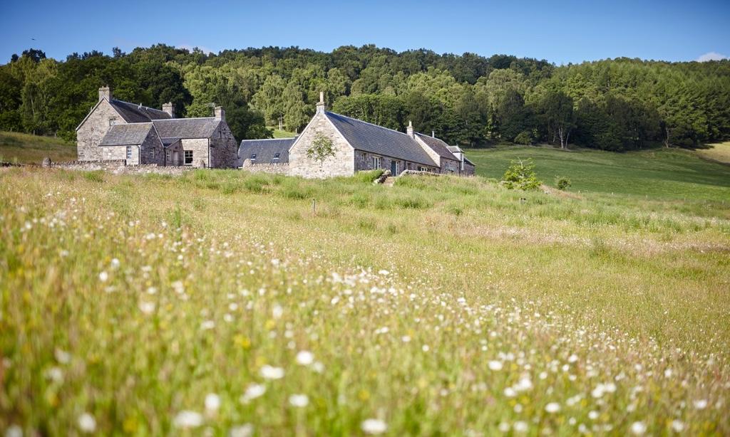Ballintaggart-meadow