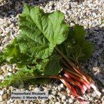 Prestonfield Rhubarb
