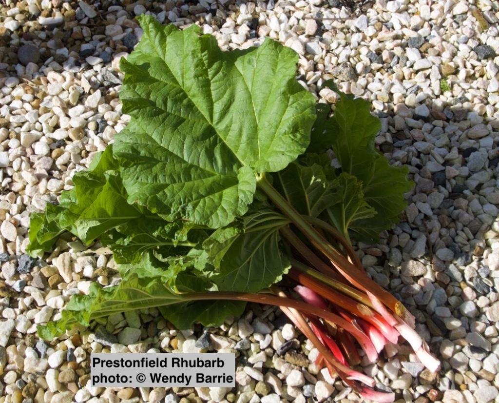 prestonfieldrhubarb