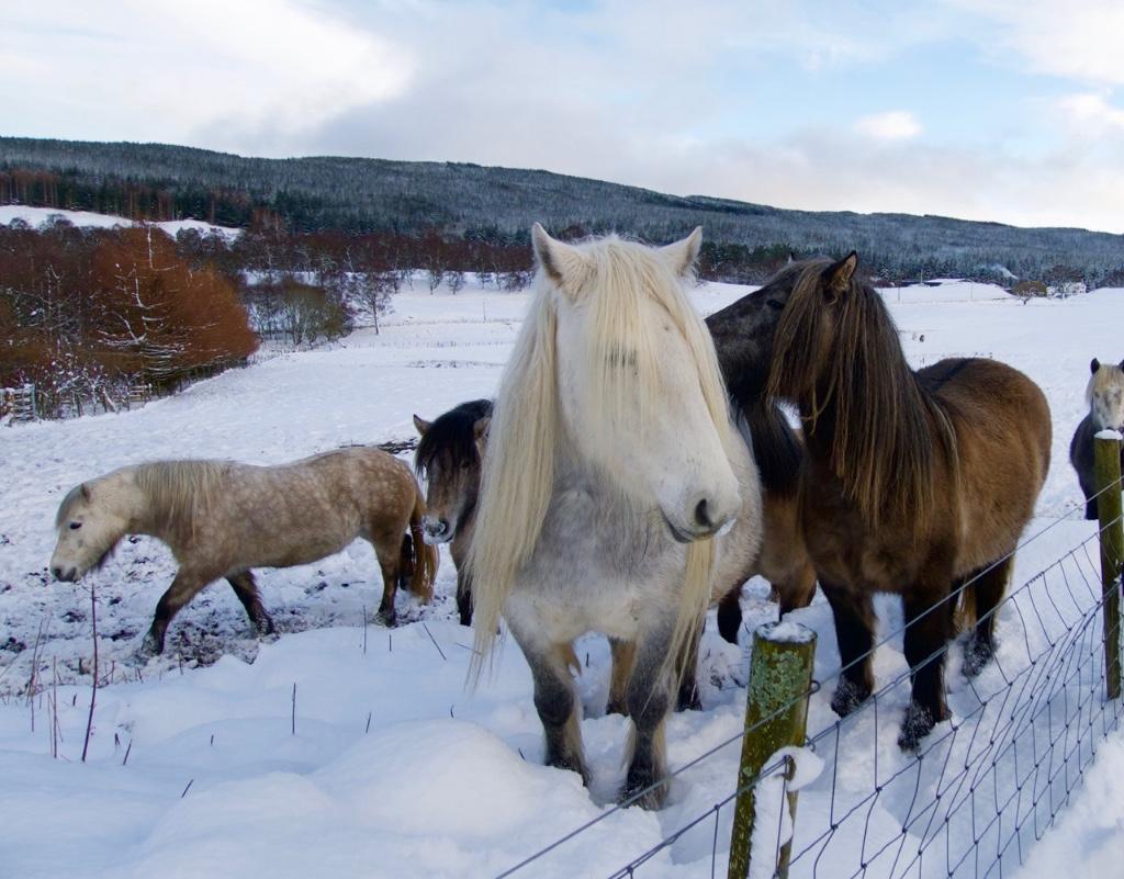 errichel-ponies1
