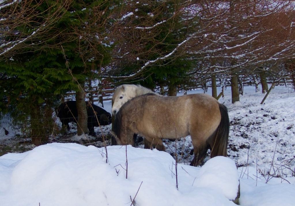 errichel-ponies2