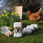 EGGS-CITING SUSTAINABLE EASTER TREATS FROM DEMIJOHN