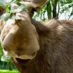 Moose, Marmalade and other Musings….