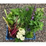 Contini Kitchen Garden June Harvest Basket