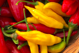 Gather your Galloway Chillies