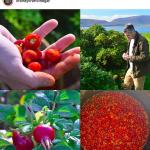 Fine Foraged Seasonal Produce from Orkney Craft Vinegar